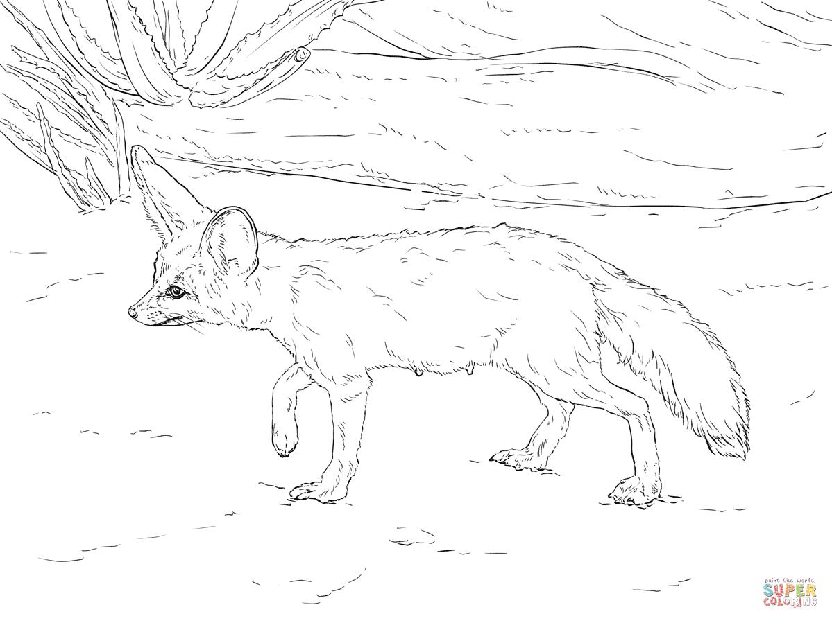 Bat-Eared Fox coloring #19, Download drawings
