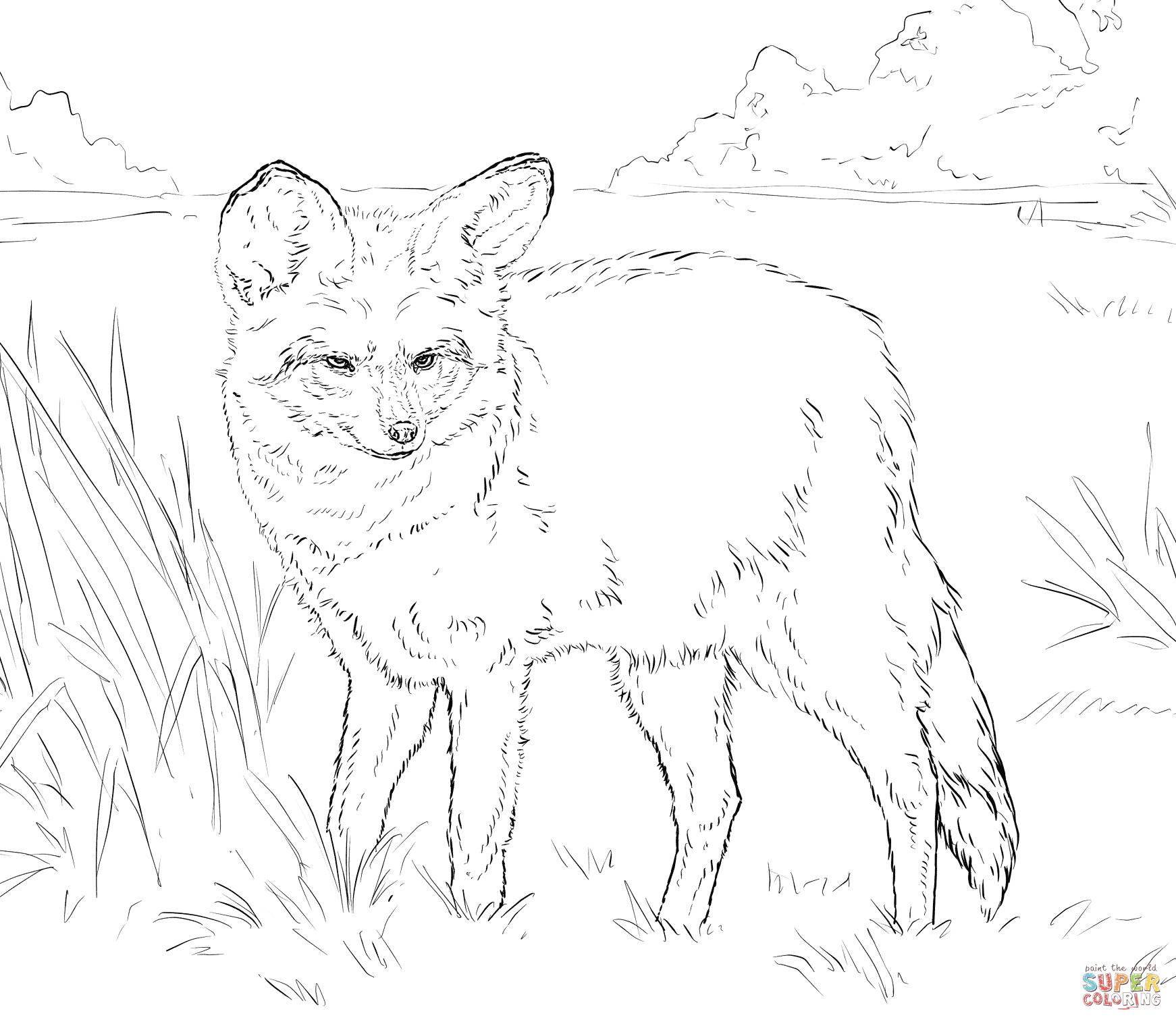 Bat-Eared Fox coloring #9, Download drawings