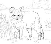 Bat-Eared Fox coloring #5, Download drawings