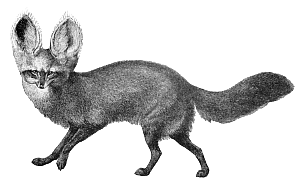 Bat-Eared Fox svg #12, Download drawings