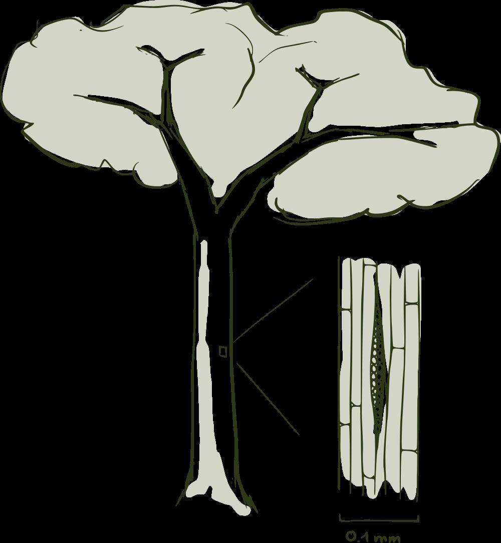 Baum svg #8, Download drawings