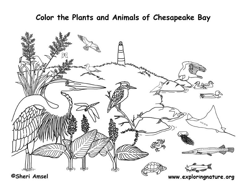 Bay coloring #3, Download drawings