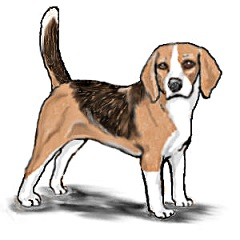 Beagle clipart #19, Download drawings