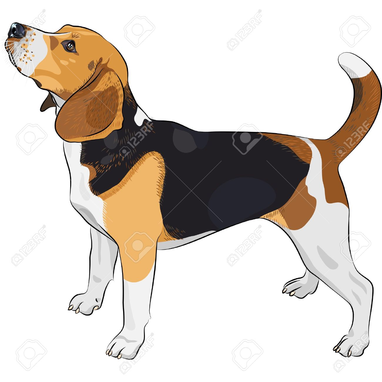 Beagle clipart #11, Download drawings