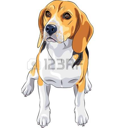 Beagle clipart #17, Download drawings