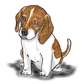 Beagle clipart #16, Download drawings