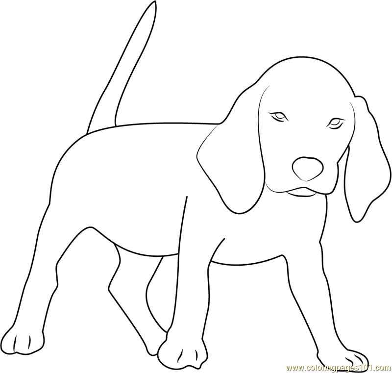 Beagle coloring #12, Download drawings