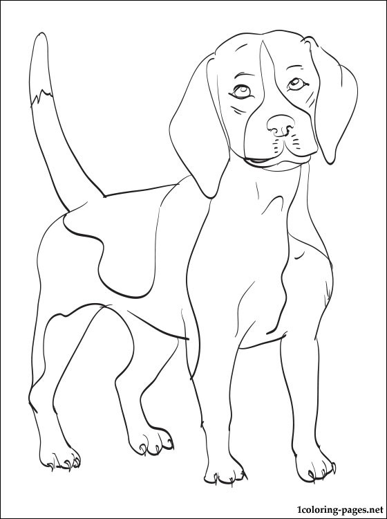 Beagle coloring #1, Download drawings