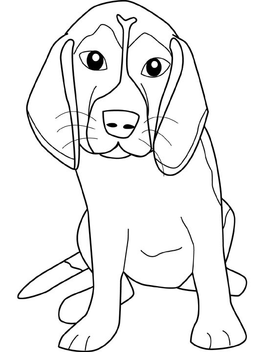 Beagle coloring #13, Download drawings