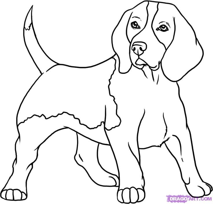 Beagle coloring #18, Download drawings