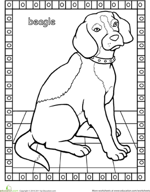 Beagle coloring #2, Download drawings