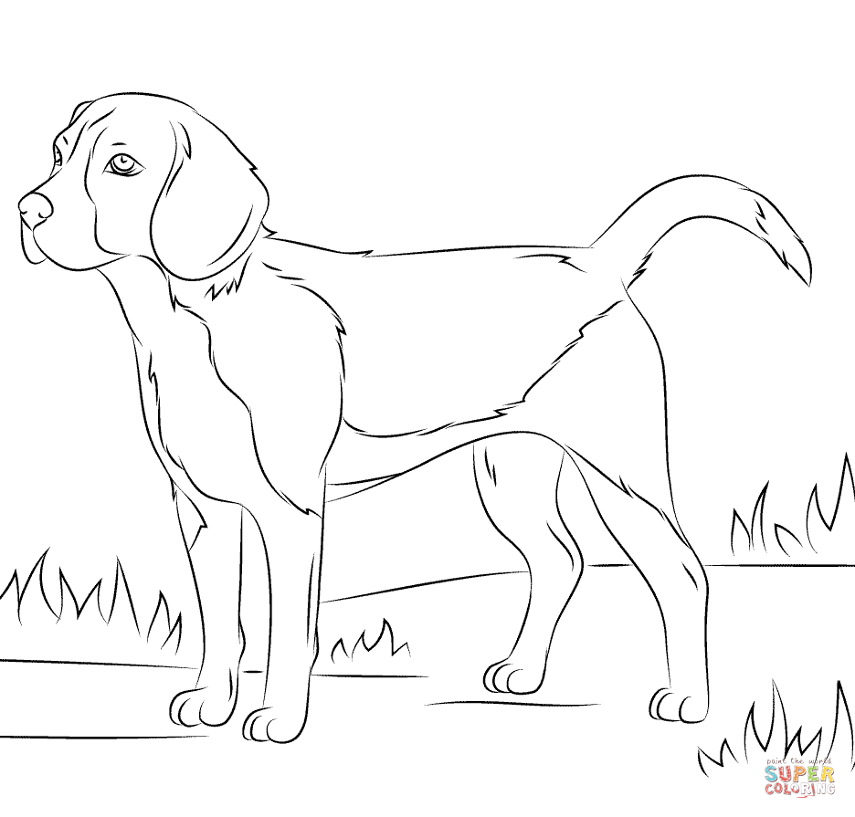 Beagle coloring #11, Download drawings