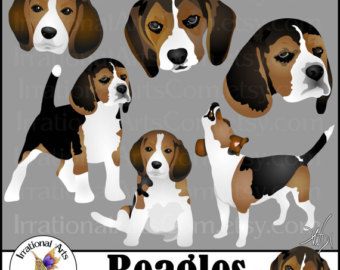 Beagle svg #16, Download drawings