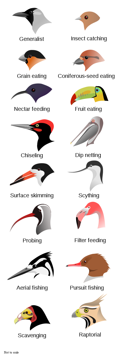 Freshwater Birds svg #11, Download drawings
