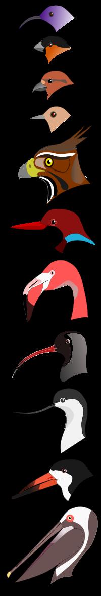 Beak svg #19, Download drawings