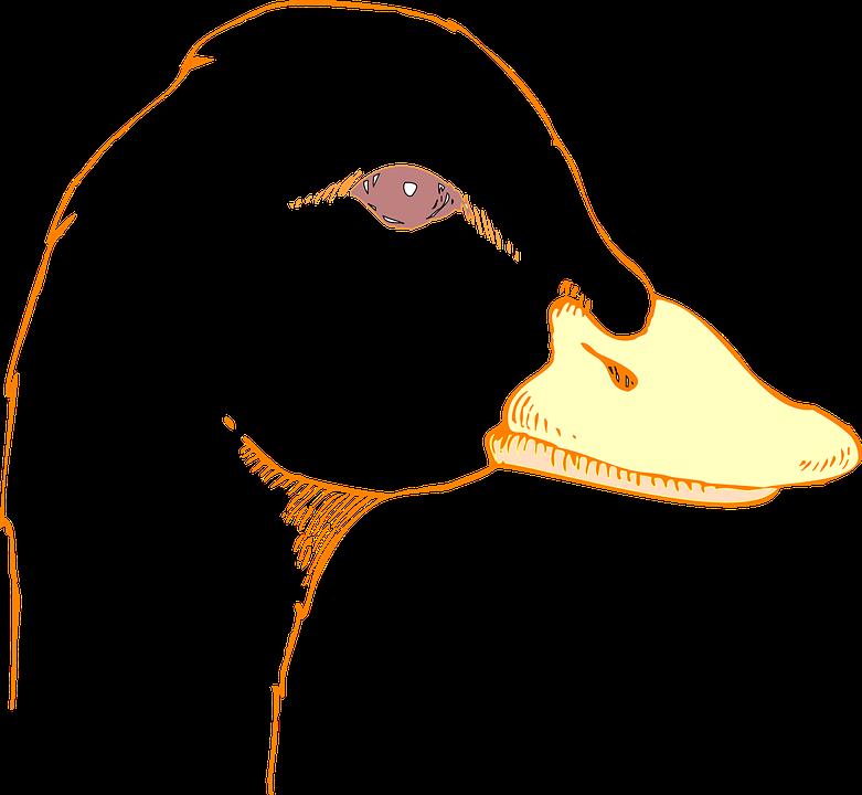 Beak svg #2, Download drawings
