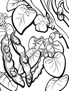 Beans coloring #2, Download drawings