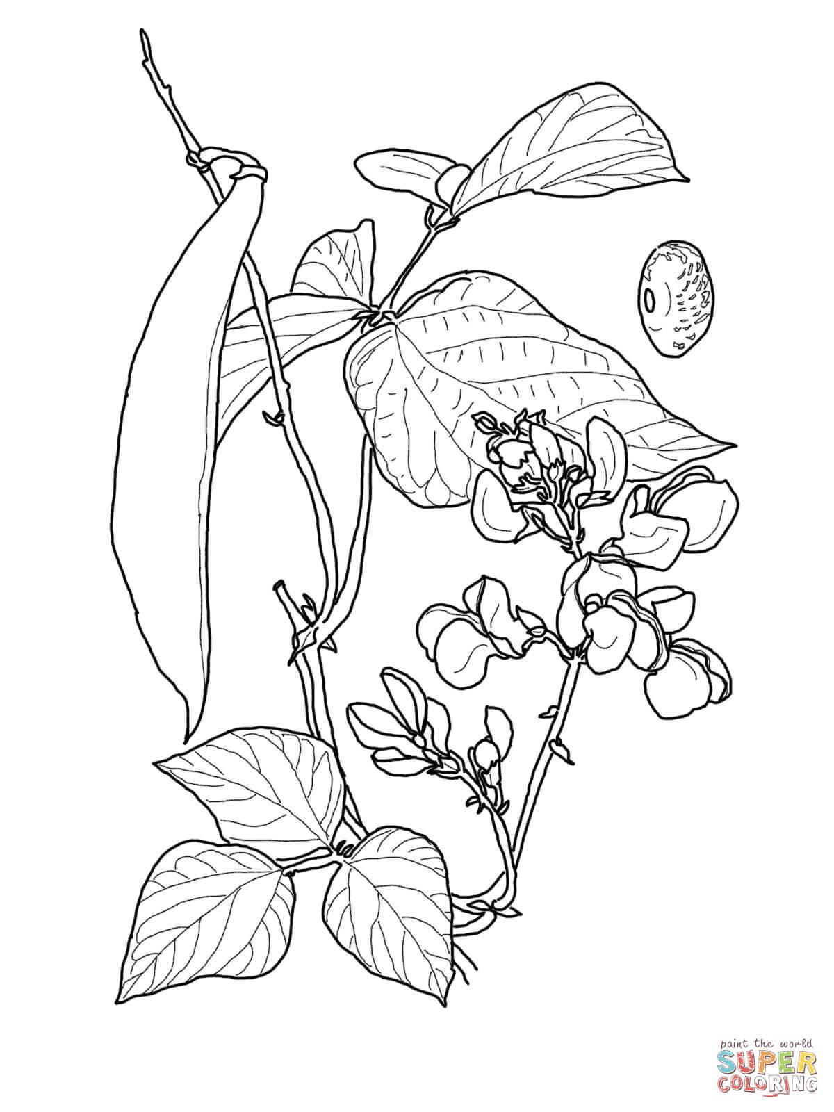Beans coloring #4, Download drawings