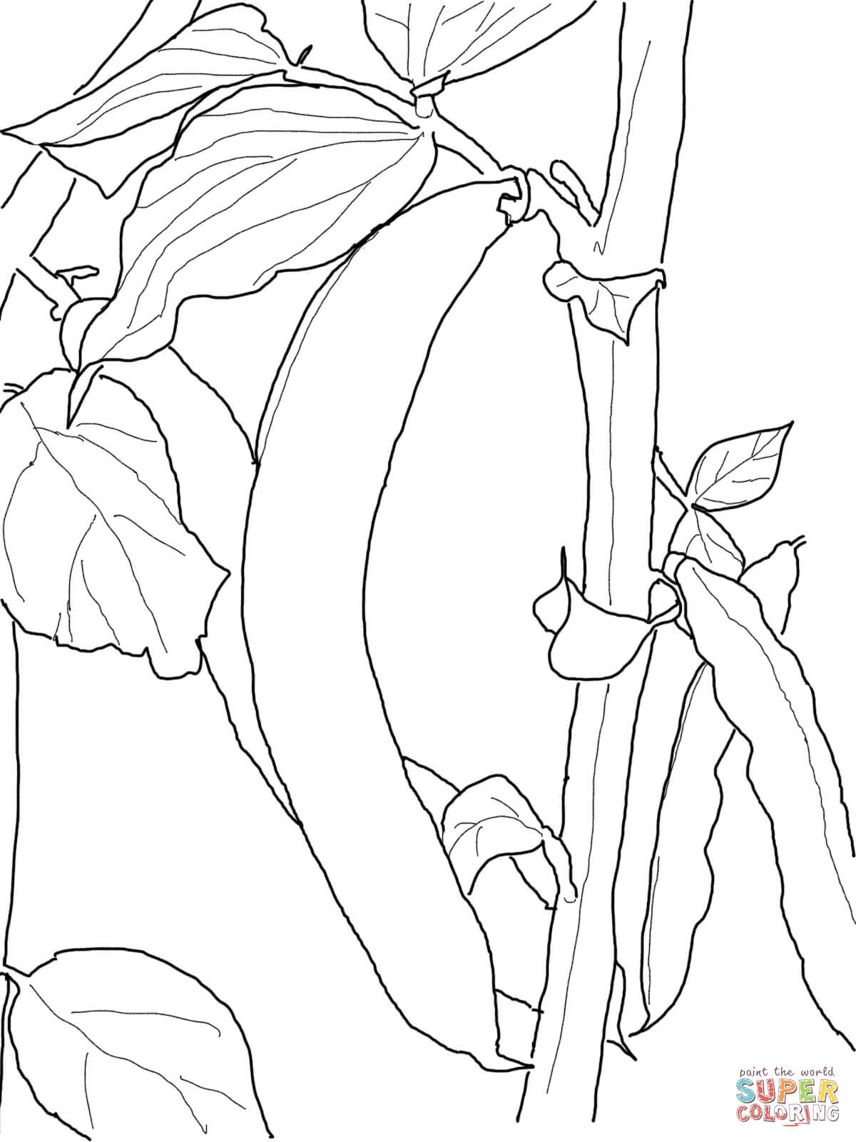 Beans coloring #6, Download drawings