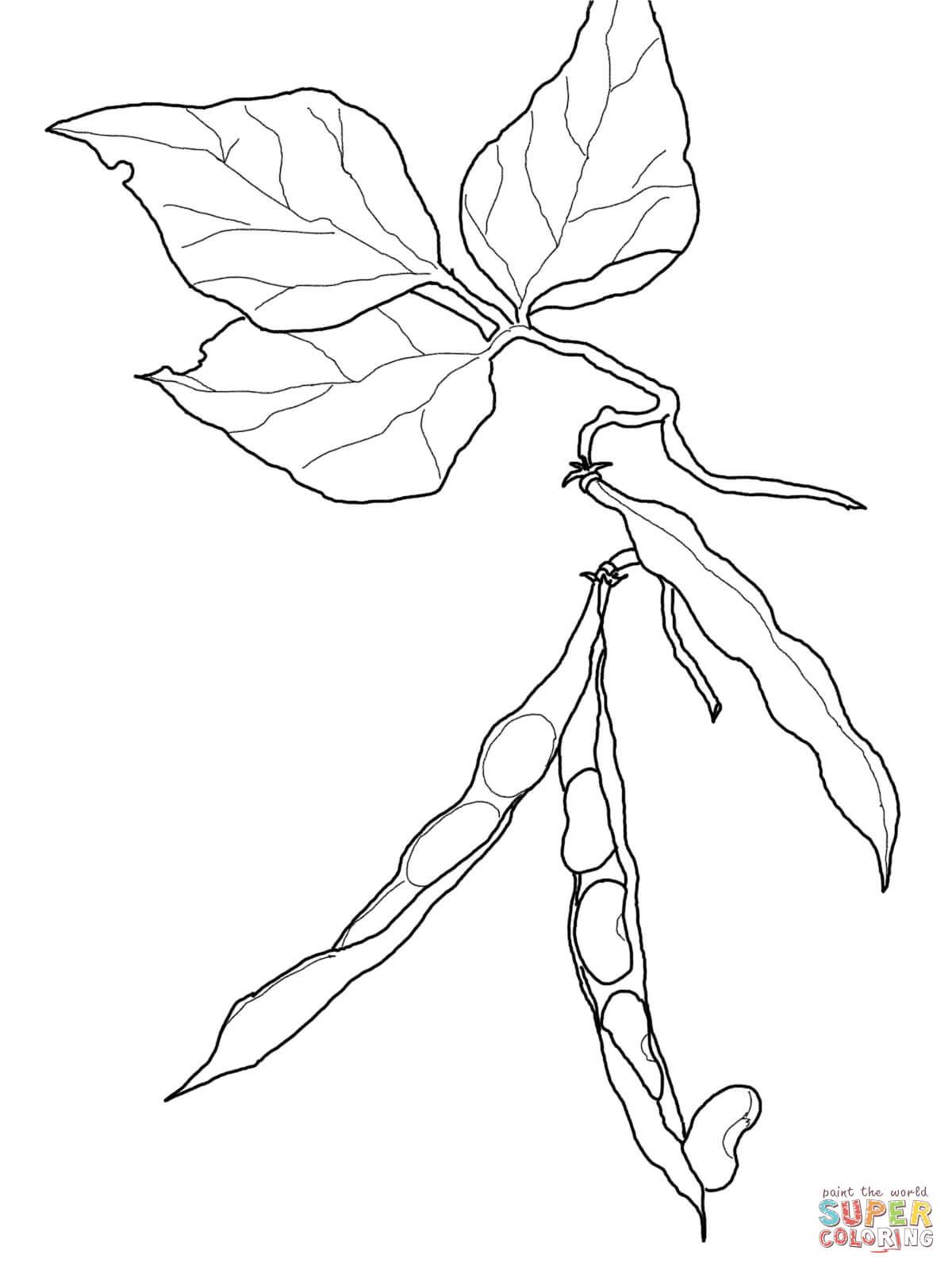 Beans coloring #5, Download drawings