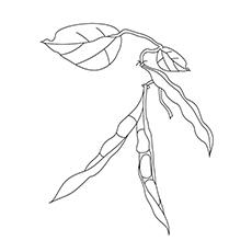 Beans coloring #13, Download drawings