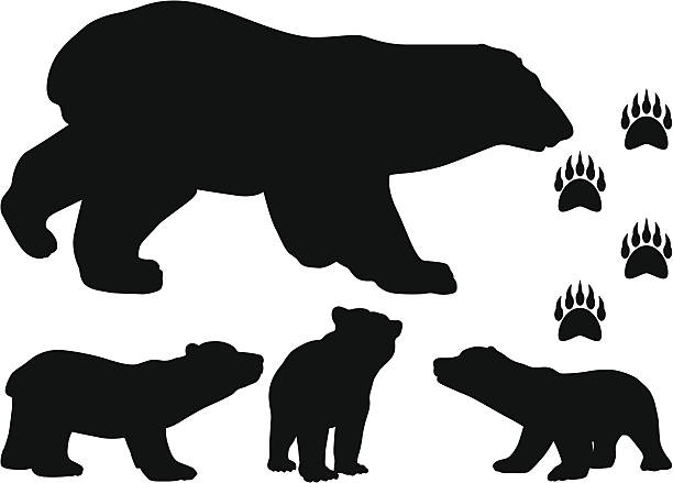 Bear Cub clipart #7, Download drawings