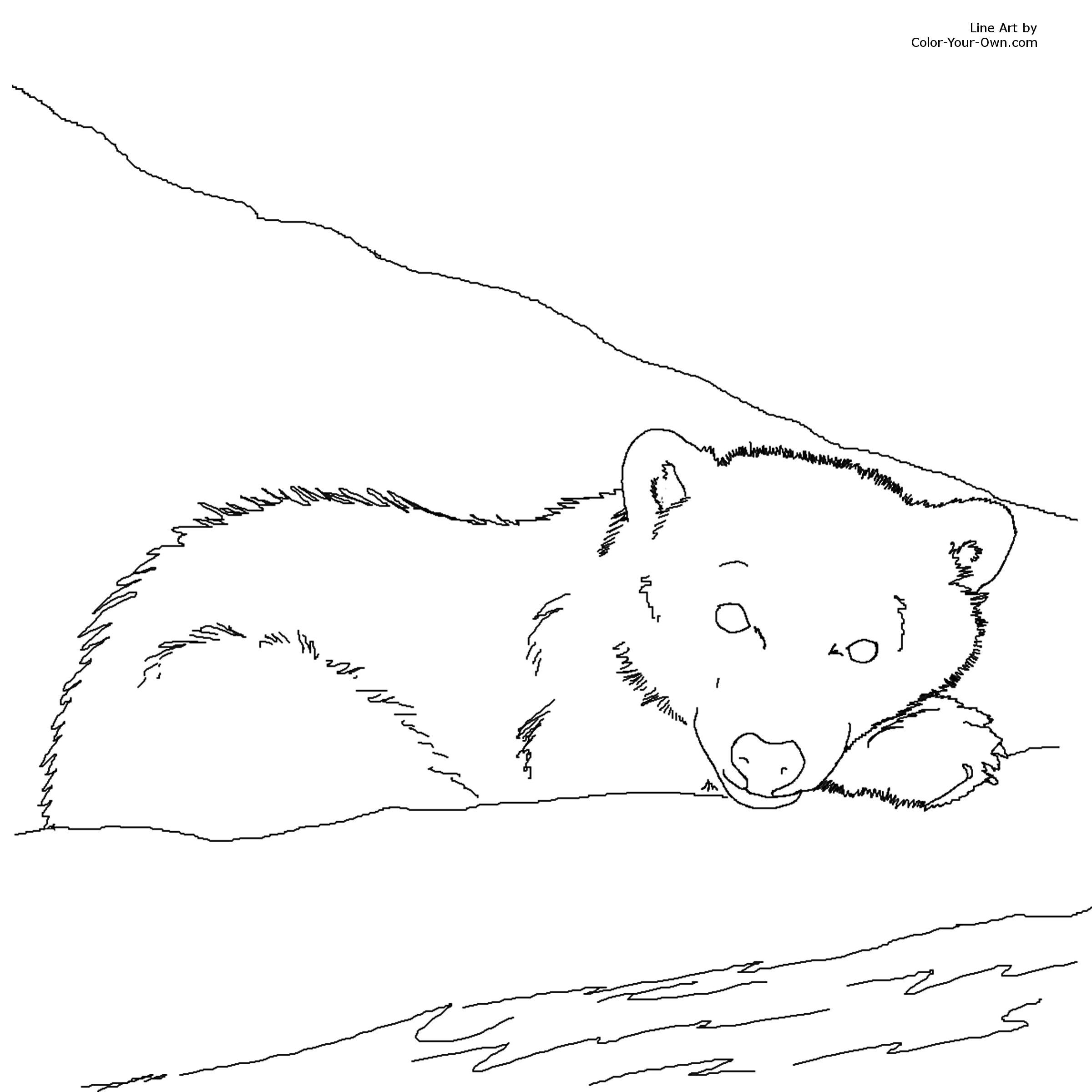 Bear Cub coloring #8, Download drawings