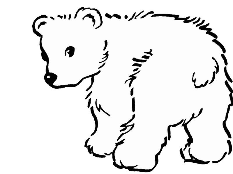 Bear Cub coloring #1, Download drawings
