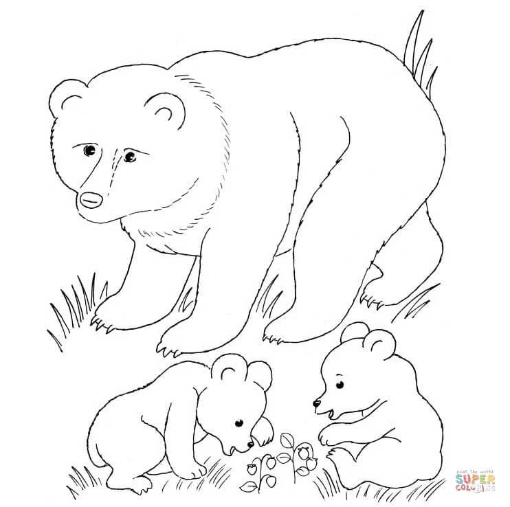 Bear Cub coloring #15, Download drawings