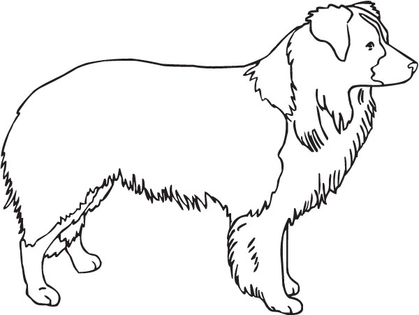 Bearded Collie clipart #2, Download drawings