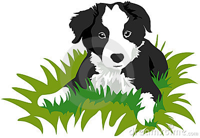 Bearded Collie clipart #16, Download drawings