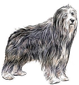 Bearded Collie clipart #3, Download drawings