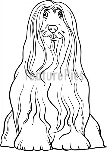 Bearded Collie coloring #4, Download drawings