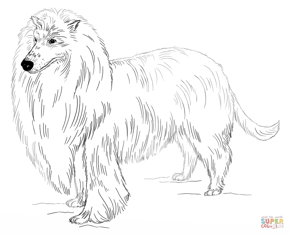 Bearded Collie coloring #19, Download drawings