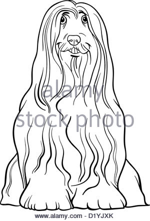 Bearded Collie coloring #3, Download drawings