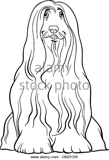 Bearded Collie coloring #2, Download drawings