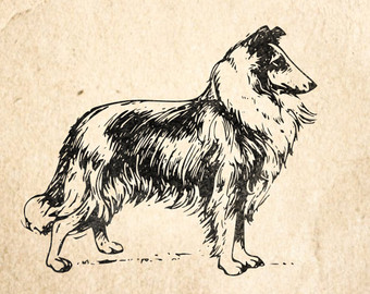 Bearded Collie svg #8, Download drawings