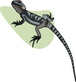 Bearded Dragon clipart #14, Download drawings
