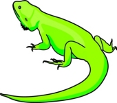 Bearded Dragon clipart #2, Download drawings
