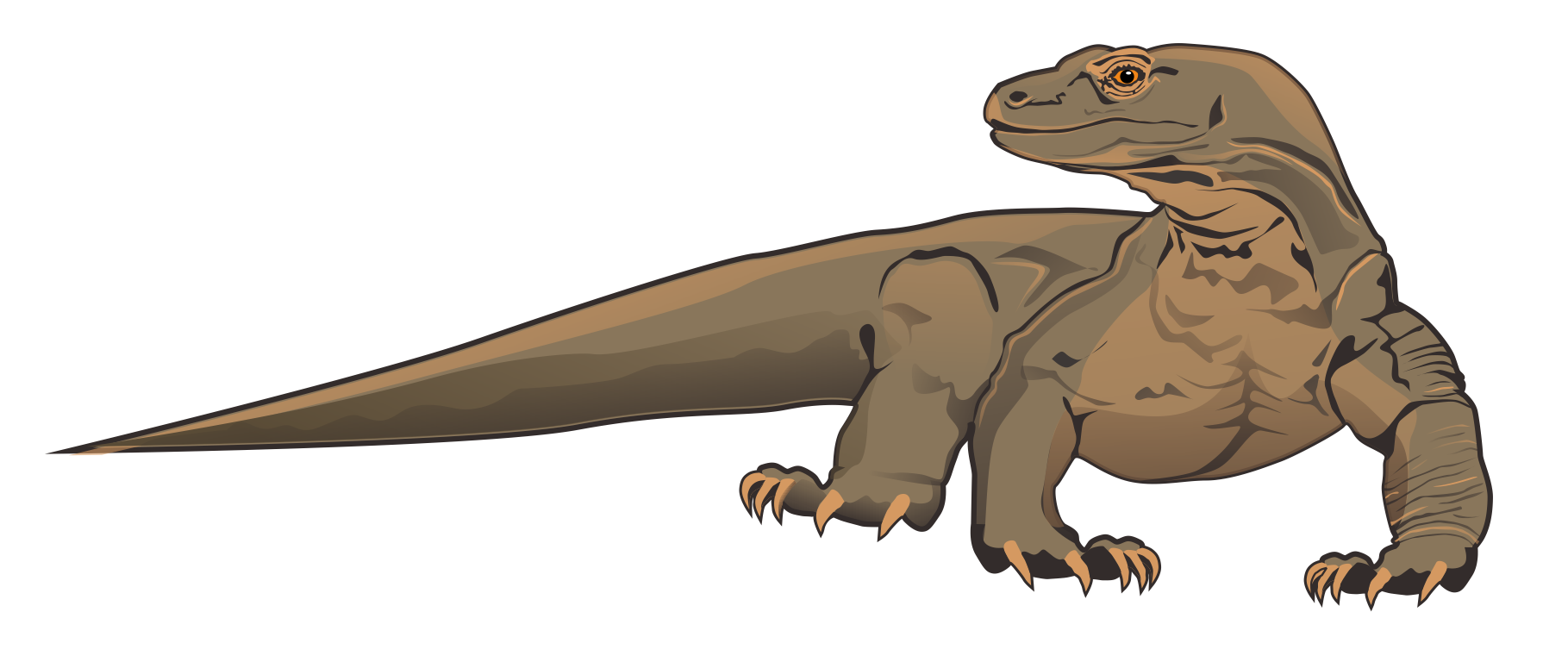 Komodo Dragon clipart #14, Download drawings