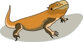 Bearded Dragon clipart #1, Download drawings