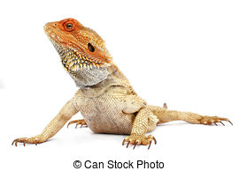 Bearded Dragon clipart #5, Download drawings