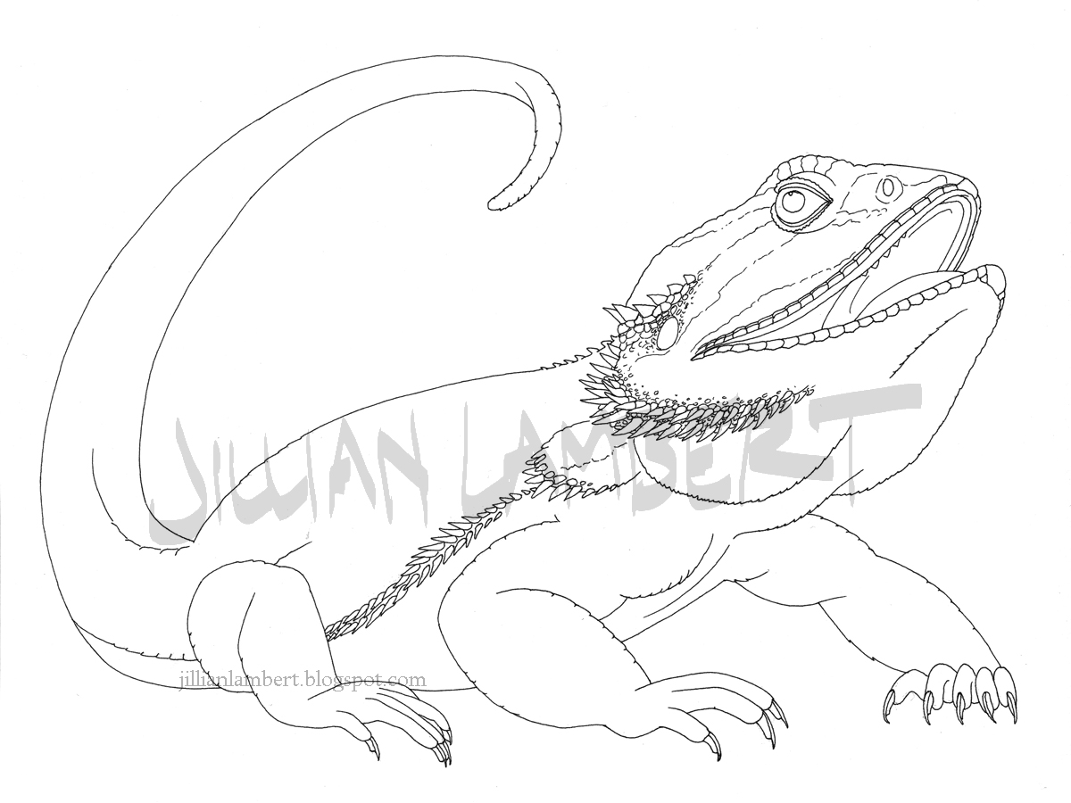 Bearded Dragon coloring #4, Download drawings