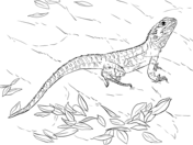 Bearded Dragon coloring #16, Download drawings