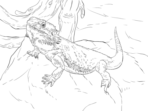 Bearded Dragon coloring #8, Download drawings