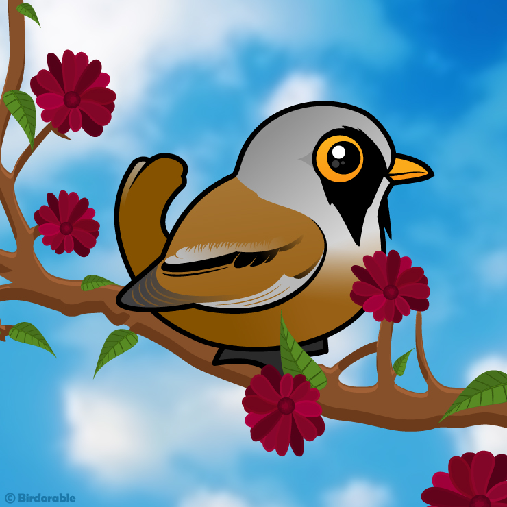 Bearded Reedling clipart #6, Download drawings