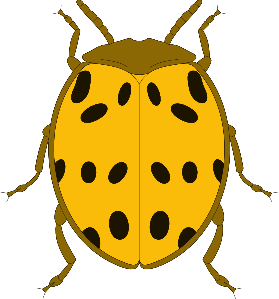 Beatle clipart #10, Download drawings