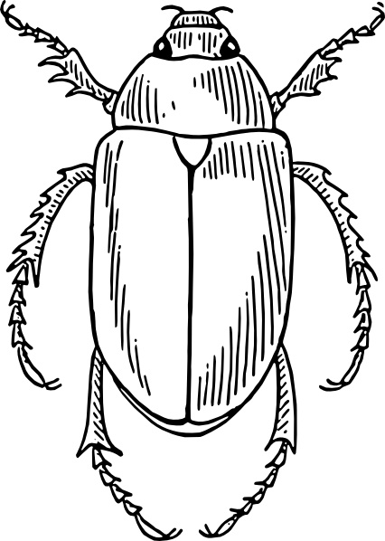 Beatle clipart #9, Download drawings