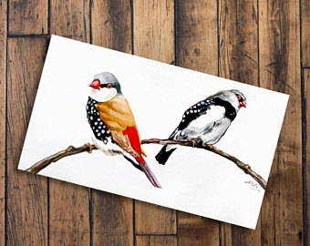 Beautiful Firetail clipart #12, Download drawings