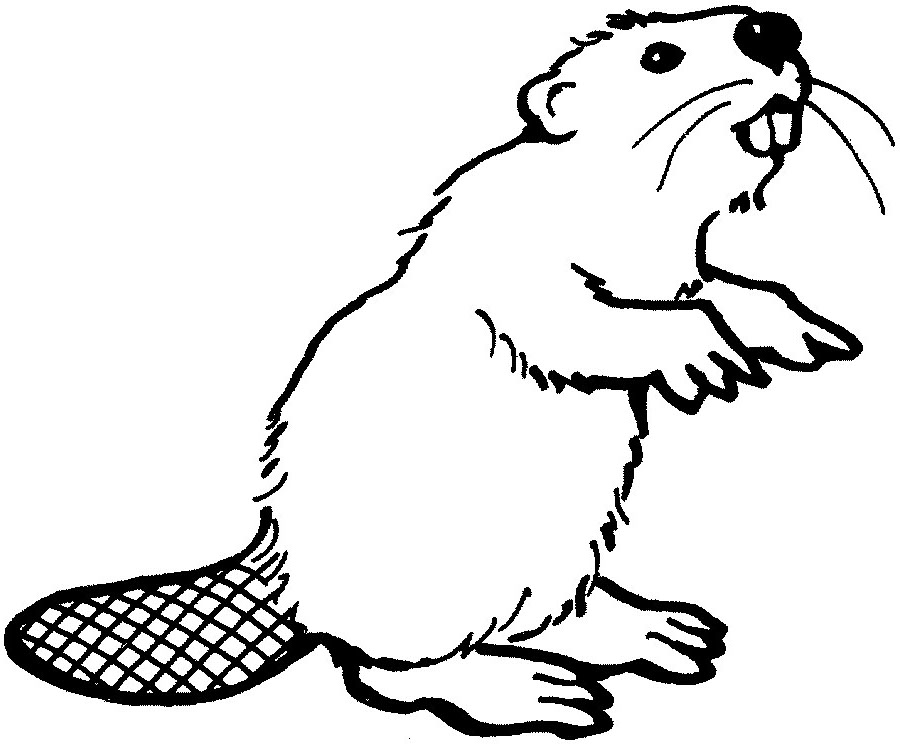 Beaver clipart #15, Download drawings